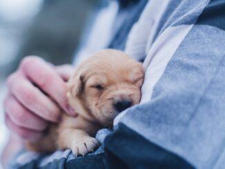 hvalp-hunde-forsikring-koebstaederne